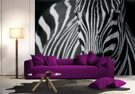 Zebra black &white wall mural